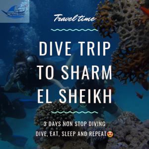 Dive Trip to Sharm El Sheikh